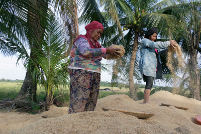 09-07-FAO-rice-sifting